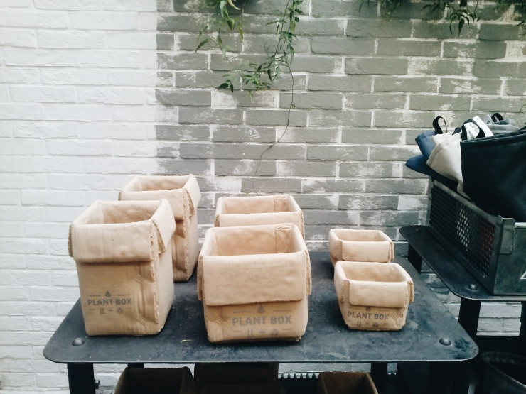 Merci Paris basement level gardening homewards plant pots