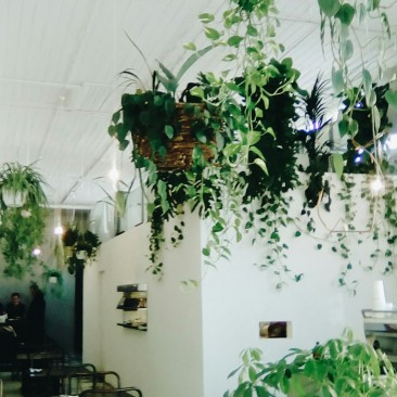 Uncommon Cafe Windsor Chapel Street Melbourne with Hanging plants